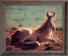 Horse Colt Wildlife Animal Wall Decor Barnwood Framed Picture Art Print (19x23)