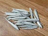 """CRAPPIE FISHING PANFISH JIG BLUEBERRY MINNOW Details about  / MICRO SPLIT-TAIL MINNOW 30 1/"""""""