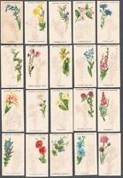 1923 Carreras Wild Flower Art Series Tobacco Cards Complete Set of 25