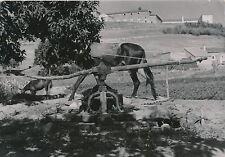 ESPAGNE c. 1950 - Ciudad Rodrigo Le Puit - Div 4111