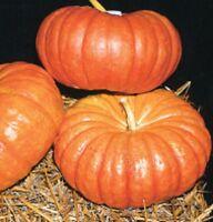 Heirloom CINDERELLA Pumpkin Rouge Vif d'Etampes 15 SEEDS Delicious Pretty Decor