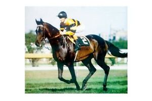 GOLD AND BLACK - 1977 Melbourne Cup winner modern Digital Photo Postcard