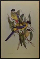 """John Gould Brown's Parrakeet Bird Limited Edition Print 21"""" x 14.5"""""""