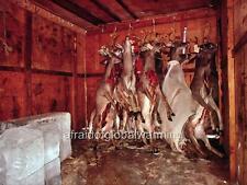 Photo. 1972. Texas.  Deer Storage - Ice Blocks