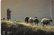 BR1446 France elevage sheeps brebis
