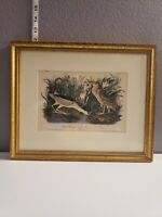 Vintage Lithograph John James Audubon First Edition Black Crowned Night Heron