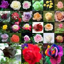 200Pcs  Mixed Rare Plants Multi-Colors Rose Peony Flower Seeds Garden Decor