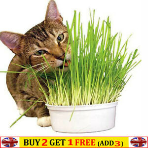 Cat Grass Seeds for Planting Organic  Pets Health Food 400 Seeds/pack 20g