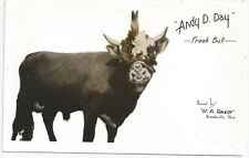 Photo Souvenir Postcard ~ Freak of Nature Bull Andy D-Day c1940s