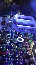 MMC Live coral Reef in a box! 20 coral pack SPS Zoas soft mushroom Favia LPS
