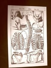 Ossa umane Tavola anatomica Litografia Giulio Cesare Casseri 1627 Ristampa