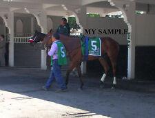 BEHOLDER 8 by 10 PHOTO 2014 Ogden Phipps Horse Race BELMONT PARK Breeders Cup #3