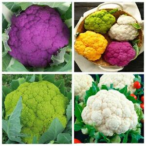 Seeds Cauliflower Cabbage Mix Purple White Green Vegetable Organic Heirloom