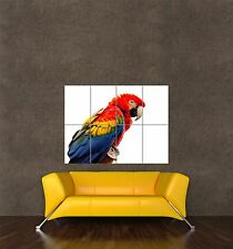 GIANT PRINT POSTER PHOTO NATURE BIRD PARROT MACAW RED BLUE YELLOW PDC048