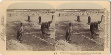 Salines Solinen Russie Russia Stereo Vintage Citrate