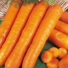 Zanahoria-Principios De Nantes - 2000 Semillas