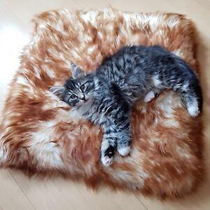 Lambskin - Cat Pillow Cat Bed 45x45 CM Merino Sheepskin Pillow