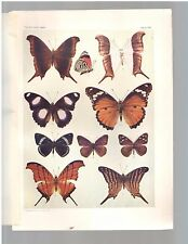 """1904 Colored Art Print Engraving Of  """"10 Butterflies"""" Plate XXI Free Shipping"""