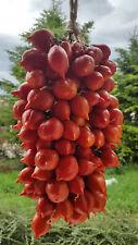 10 graines de tomate très ancienne PIENNOLO del VESUVIO tomato seeds m.bio