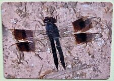 Dragonfly Insect Full Deck Playing Cards New & Original 52+2 Jokers L@K Nice!