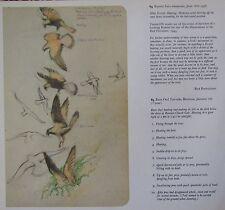 Schöne Vintage Vogel Aufdruck ~ Stecker Kestrel Jagd ~ Tunnicliffe