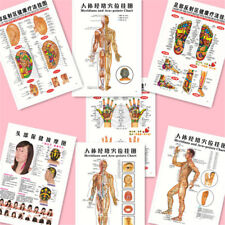 7pcs/set English Acupuncture Meridian Acupressure Points Posters Chart Wall Map