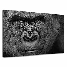 Black Gorilla Africa Face Wildlife Silverback Canvas Wall Art Picture Print