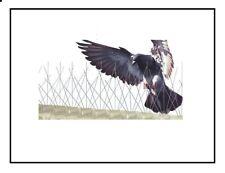 Fence Wall Spike Pack 1 meter Anti-Bird Pigeon Repeller Deterrent