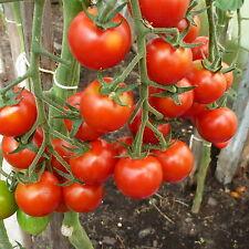 Cherry / Cocktai Tomaten, Kirschtomaten  Saatgut 20 Stück Saamen