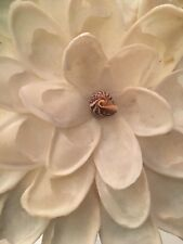 Huge Gorgeous Handmade Flower from Pacific Ocean Sea Shell & Palm Leaves 6� diam