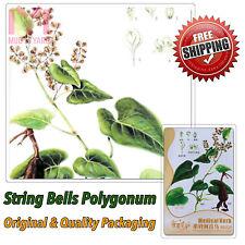 6 x Red Polygonum Multiflorum Seeds Fo-ti He Shou Wu Fleeceflower Vine herb seed