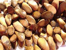 CL-81 perline di legno Robles artigianale marrone cera LUCIDATO affettato pepite
