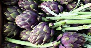 "Artischocke ""Romanesco"", mehrjähriges winterhartes Gourmetgemüse Pflanze rar"