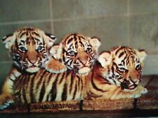 VINTAGE PHOTO POST CARD TIGER CUBS BEAUTIFUL WOODLAND PARK ZOO SEATTLE WA.