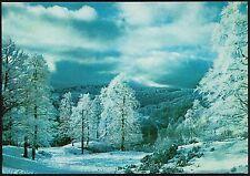 AA3144 L'Aquila - Provincia - Parco Nazionale d'Abruzzo - La faggeta in inverno