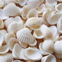 Small White Natural Conch Sea Shells 100Pcs DIY Tank Aquarium Ornaments Decors
