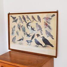 Vintage British Birds Identification Chart, H J Slyper 1960 Large Framed Print