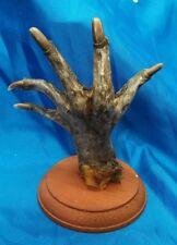 ROUGAROU CREATURE HAND DISPLAY,SIDESHOW GAFF DISPLAY,ODD,BIZARRE,MYTH,FOLK LORE