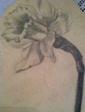 Rare Antique Daffodil Pencil Sketch Local Artist Stunning