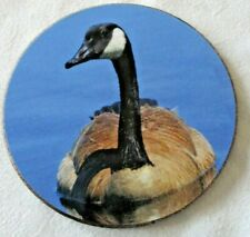 A Feathered Friends Bird Coaster ~ Canada Goose