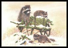 355-Msa Giordano Bird Raccoon Christmas Greeting Card New