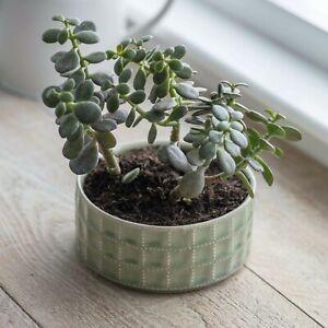 Ceramic Sorrento Bowl in Green, Plant Pot, Succulent Cactus or Herb Planter Sage