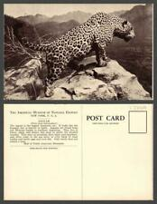 VINTAGE POSTCARD TOPIC: Tigers