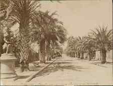 France, Hyères, boulevard des palmiers  vintage albumen print. Tirage albuminé