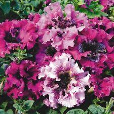 Petunia hybrida superbissima Mix F1 Flower Seeds from Ukraine