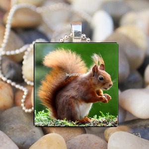 Squirrel Animal Art Cabochon Glass Silver Tile Chain Pendant Necklace