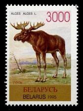Elch. 1W. Weißrußland 1996