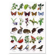 British Hedgerow A5 Identification Card Chart Postcard
