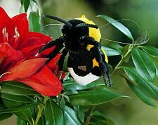 Kösener 4910 Stuffed Toy Linchen the Bumble Bee