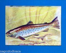 ANIMALI - Lampo 1964 - Figurina-Sticker n. 307 - TROTA -New